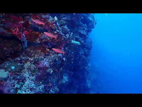 Scuba Diving In East New Britain , Papau New Guinea