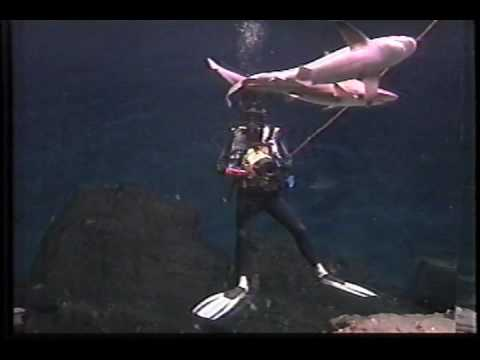 CBS Television Maritime Center Shark Dive Underwater Press Conference With Gail King & Patxi Pastor