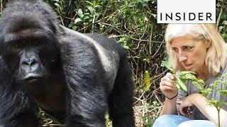 Go Gorilla Trekking in Rwanda