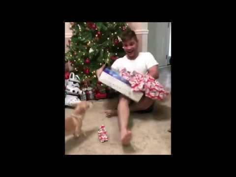 WHEN CATS ATTACK FOR CHRISTMAS (2016) - LOL! (VIDEOS)