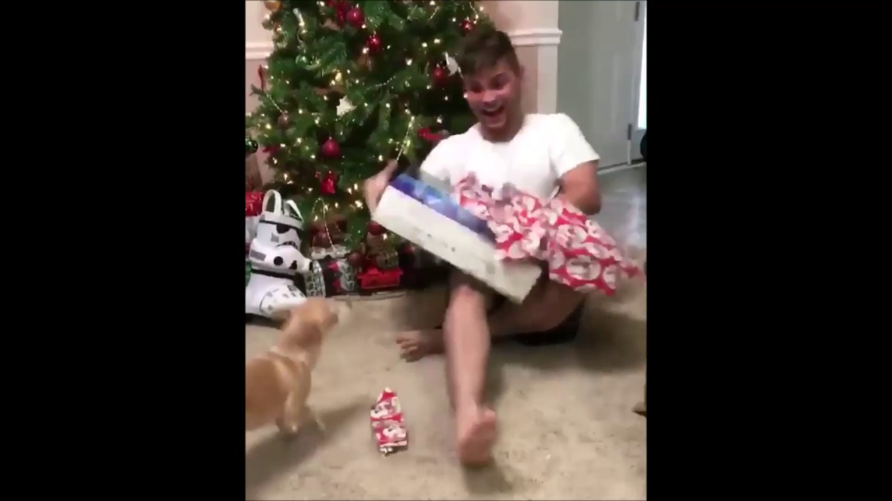 WHEN CATS ATTACK FOR CHRISTMAS (2016) - LOL! (VIDEOS) - YouTube