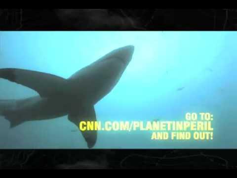 CNN International Planet in Peril - Battle Lines