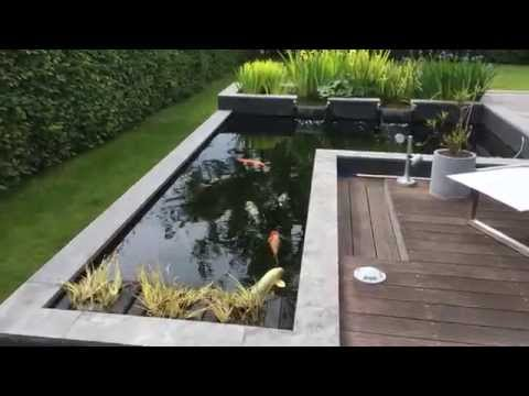 Koi Pond After 4 Years