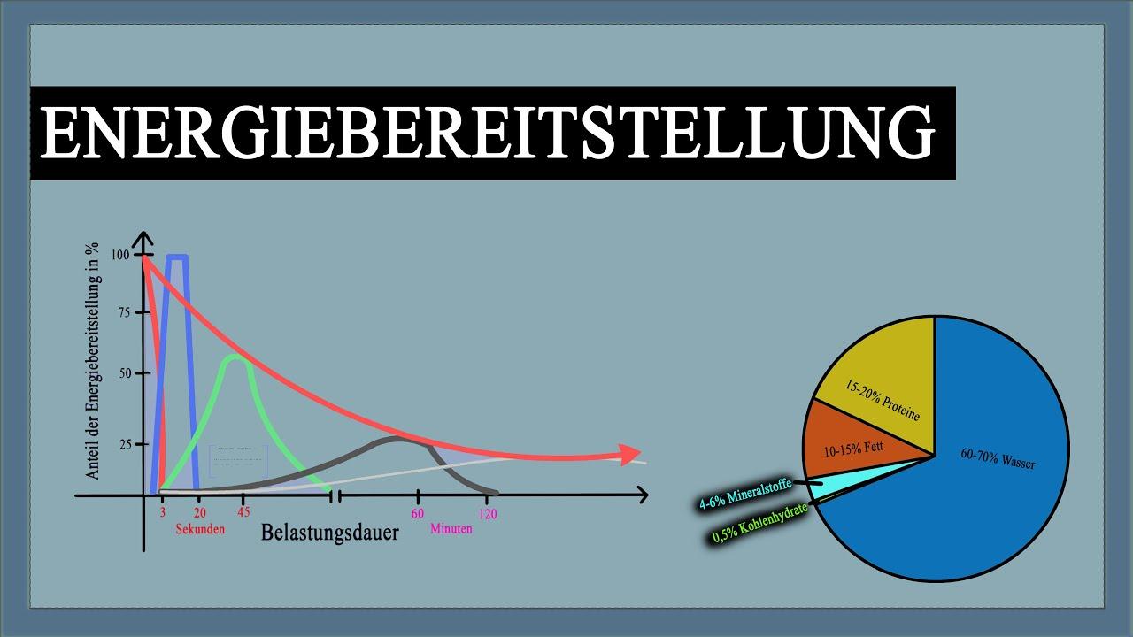 Energiebereitstellung im Muskel - Verlauf mit Erklärung + Grafiken ...