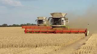 CLAAS LEXION 780 im dreier Pack-beim Weizen dreschen.