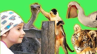 Learn Names of Animals in the ZOO by Nadine show For Children.Познавательное видео учим животных