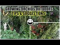 How I Successfully Grow Orchids Outdoors - SECRETS EXPOSED