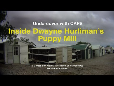 Undercover With CAPS: Inside Dwayne Hurliman's Puppy Mill - Oklahoma Breeding Facility