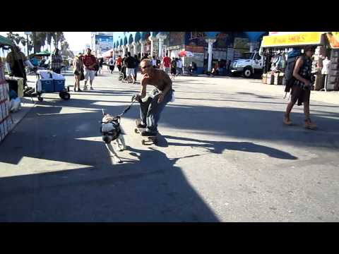 STRONG PIT BULL WITH SUNGLASSES PULLS OWNER ON SKATEBOARD VENICE BEACH CALIFORNIA MAY 3, 2011 083