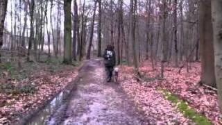 "Blickkontakt Beim Hund Weimaraner ""bei Fuss"" Training Hundetraining Iv"