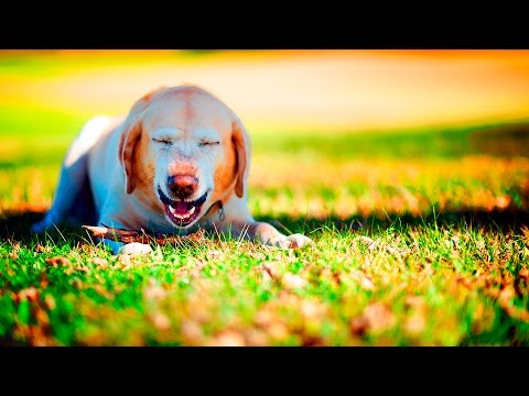 Funny Sneezing Dogs #38