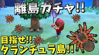 【あつまれ どうぶつの森】タランチュラ島を目指して!離島ガチャ!!