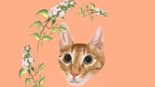 아이패드로 그린 눈이 예쁜 고양이