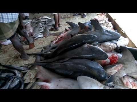 cox's bazar Fishiry ghat fish market