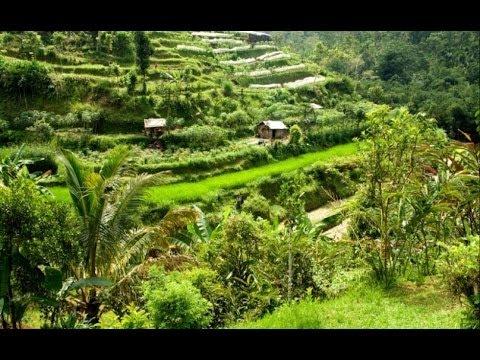 Organic Farm in Bedugul Bali
