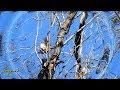 21~New Visitors~Mistletoebird~Share & Enjoy Nature~Bird Watching Videos