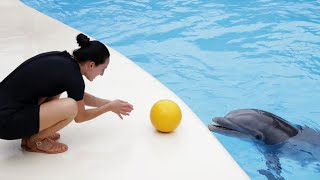 Dolphins Playtime