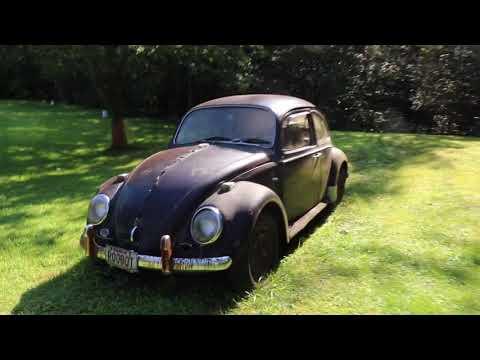 1966 Volkswagen Beetle Hunting : Yard Find : Vw Vintage 66 Bug