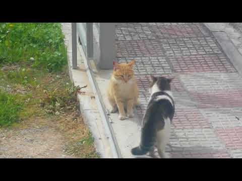 CATS' ....ARGUMENT