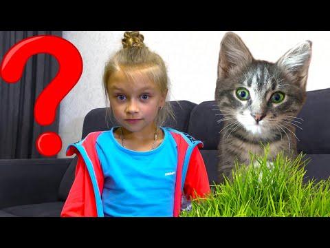 Ест ли кот траву? Подарки для Котенка и новый блохастый питомец | Видео для детей