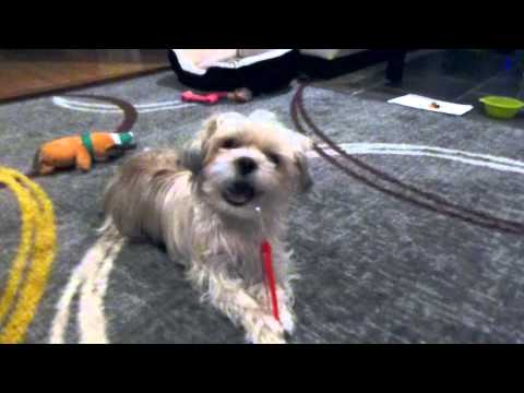 clever-dog-learns-how-to-brush-his-own-teeth