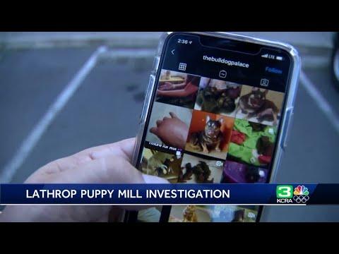 Sheriff: Man accused of illegal dog surgeries ran 'puppy mill,' in Lathrop, Manteca