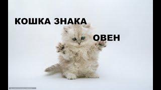ОГНЕННАЯ СТИХИЯ КОШКИ - ОВНА . кошачья МАГИЯ.