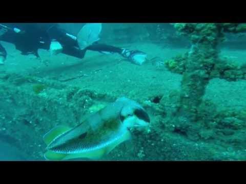 Deep Dive Specialty Course