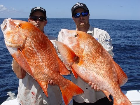 Big Red Emperor, Pearl Perch, Cod,  Nannygai Off Fraser Island With Wicked Fishing
