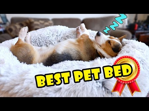 bought-amazon's-best-pet-bed-for-my-dog-||-extra-after-college