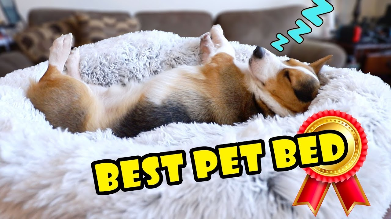 bought-amazon-s-best-pet-bed-for-my-dog-extra-after-college