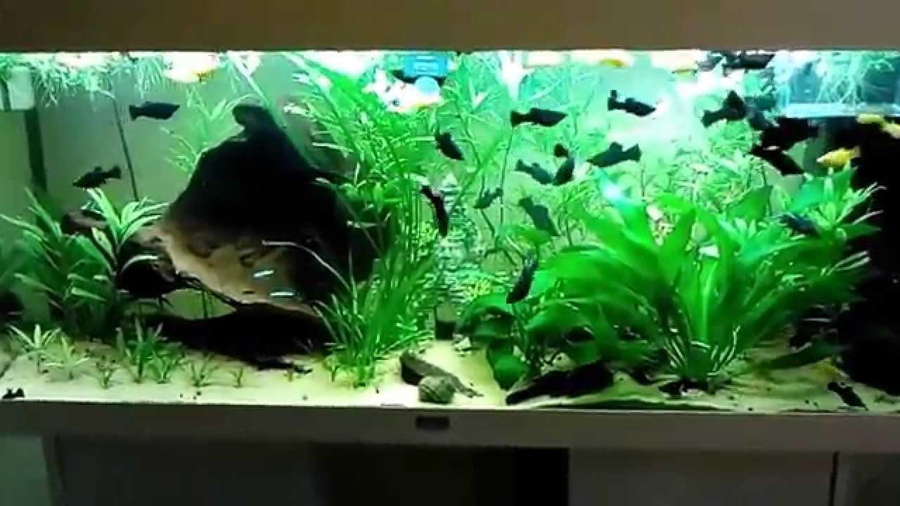 my big tank mein grosses aquarium youtube. Black Bedroom Furniture Sets. Home Design Ideas