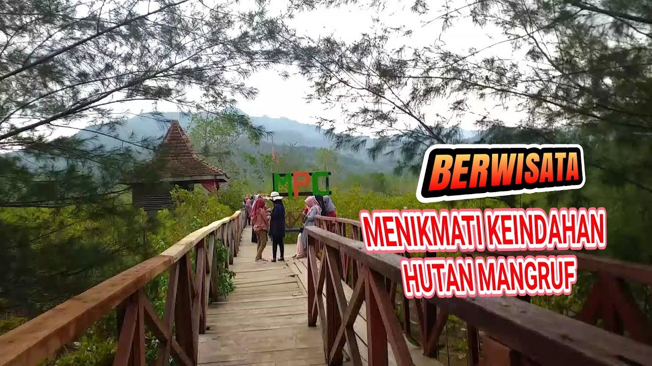 Wisata Alam Hutan Mangruf Pantai Prigi Trenggalek Jawa Timur