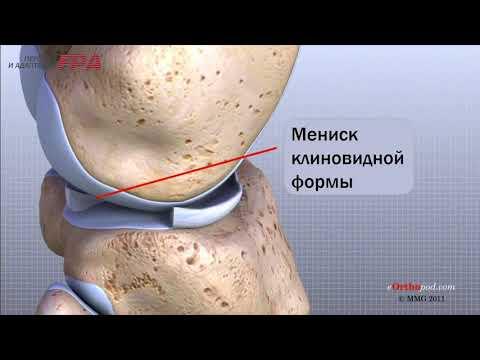 Как устроен коленный сустав человека