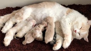 Cat Giving Birth: Cat Gives Birth To 6  Kittens - Part 2