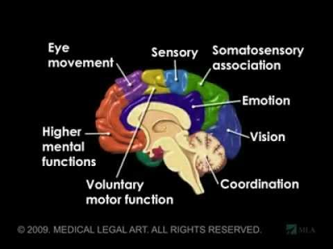 Brain Anatomy And Functions Animation Youtube