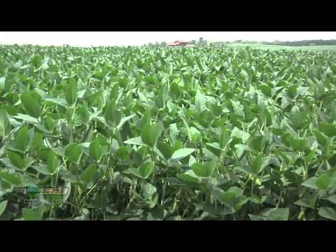 Farm Basics #738-Soybean Growth Stages (Air Date 5/27/12)