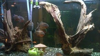 Wall Aquarium Behind The Scenes Rainbow Lifegard Filtration How To Build