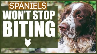 How To Stop Your SPANIEL BITING