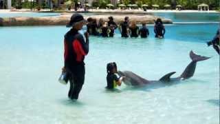 Atlantis Dolphin Swim