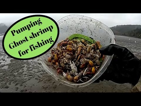 How To Pump Sand Shrimp/ghost Shrimp. Fishing Tillamook Bay