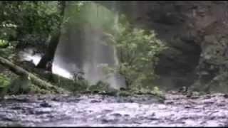 ព្រៃឈើខ្មែរ,ព្រៃឈើ,Forest and Nature Sounds,Forest,forest cambodia