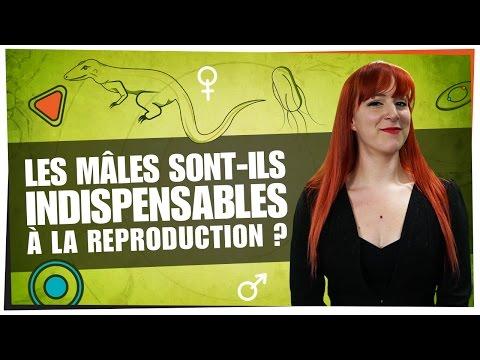 Les mâles sont-ils indispensables à la reproduction ? - Castor Mother #02 - String Theory