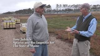Commercial Pollination in Maine's Blueberry Barrens thumbnail