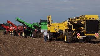 Grimme,Dewulf,AVR en Ropa rooien bij demo Avebe zetmeel aardappelen
