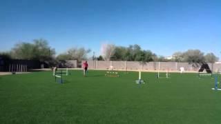 Nadac Vt Tabitha Doing Jumpers Agility