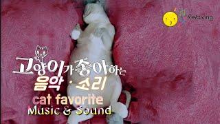 [고양이가좋아하는음악] Cat favorite Sound & Music |고양이분리불안 |고양이심리치료 |고양이수면유도 |반려동물테라피 |자연의소리ㆍ음악
