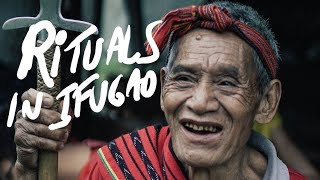 IFUGAO RICE HARVEST RITUAL Philippines
