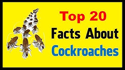 Cockroaches - Facts