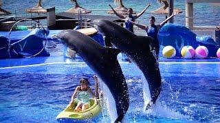 4K Ultra HD Dolphin Show Mallorca Marineland